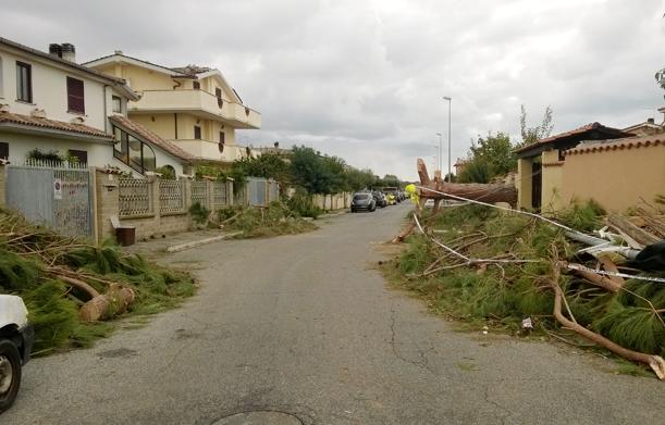 Cerreto alberi in strada
